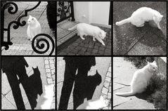 Typisch Katze ..!