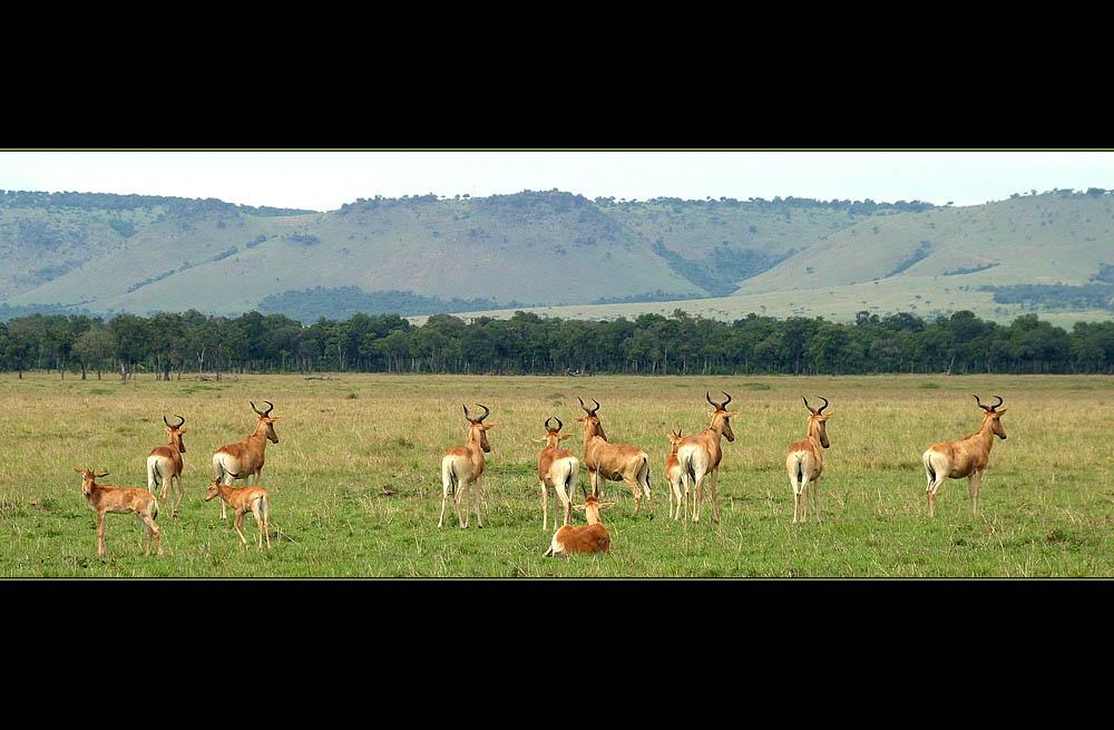 Typisch Masai Mara II