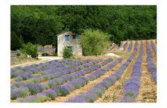 Typisch Provence