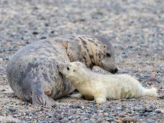 Typisch Säugetier!