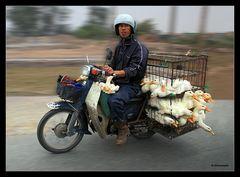 Typisch Vietnam