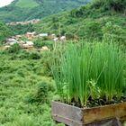 """typischer """"Kräutergarten"""" im Norden von Laos"""