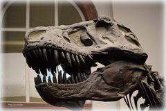 Tyrannosaurus Rex - 2 -