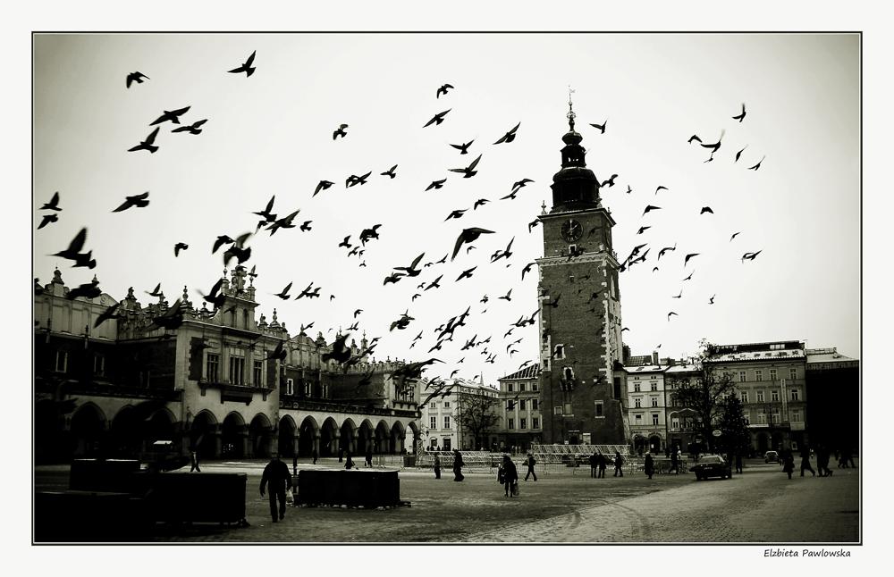 ..:: Uccelli ::..