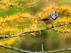 Uccelli 5