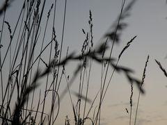 ... Über Alles wächst mal Gras ...
