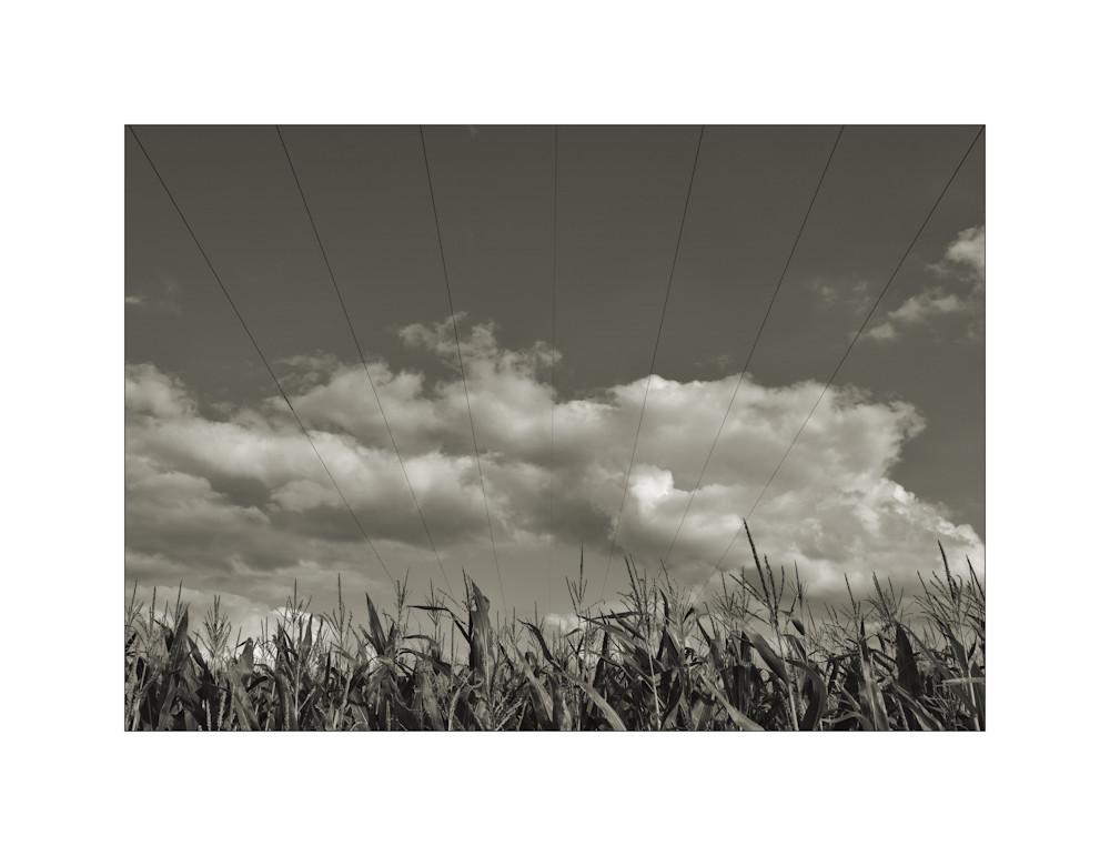 Über dem Maisfeld