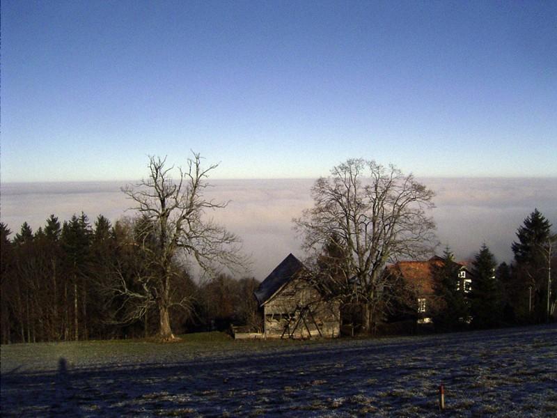 Ueber dem Nebel