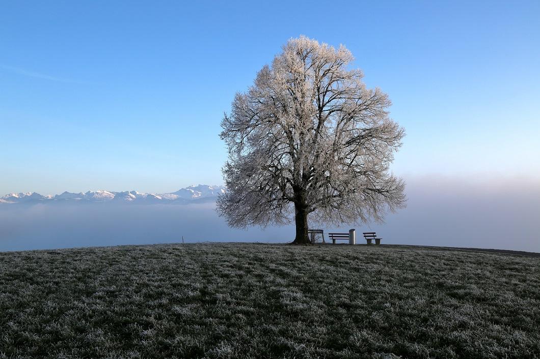 über dem Nebel 26.12.18