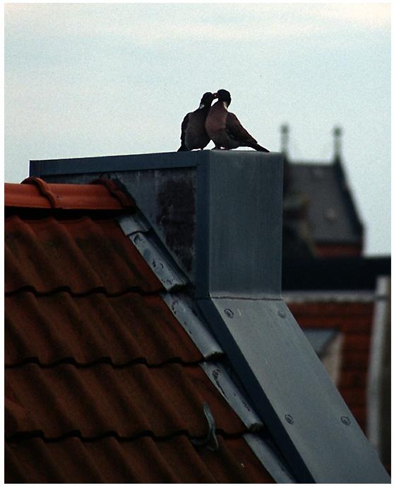 Über den Dächern von Norderney ...