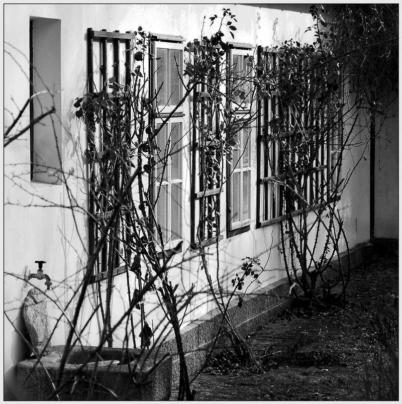 Über den Zaun geschaut