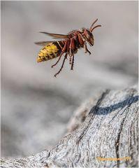 über der hornissen-nest-höhle.....