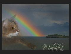 Ueber die Regenbogen-Brücke