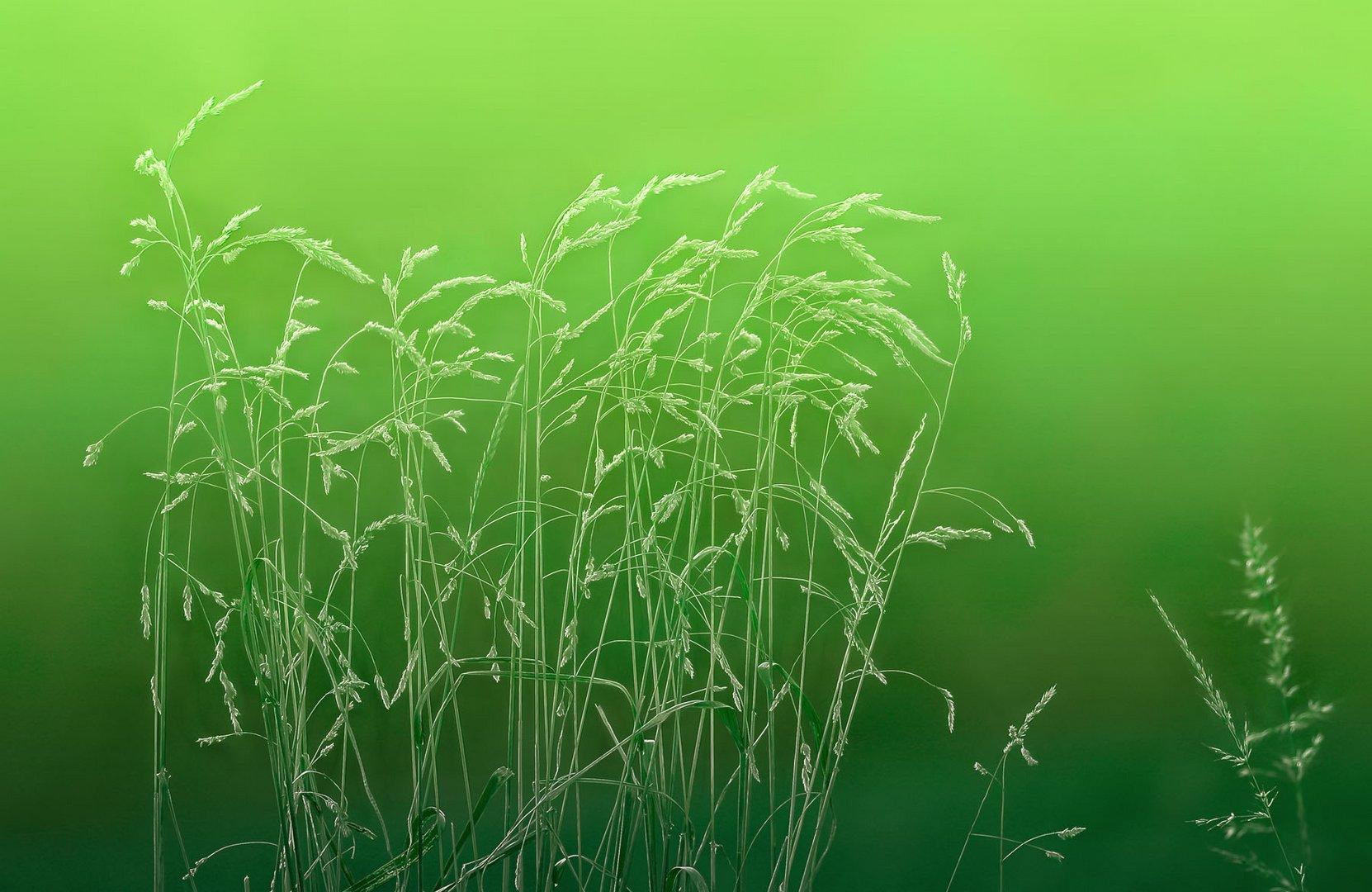 über etwas gras wachsen lassen ...