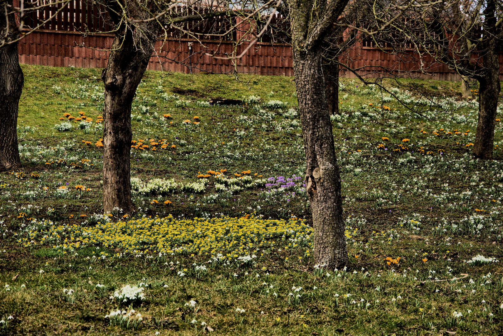 Über Nacht kam der Frühling! .....Nr. 4