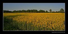 Überall Gelb