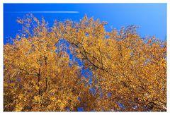 Überflieger über Goldenen Oktober... (atme ich Kerosin ein ?)