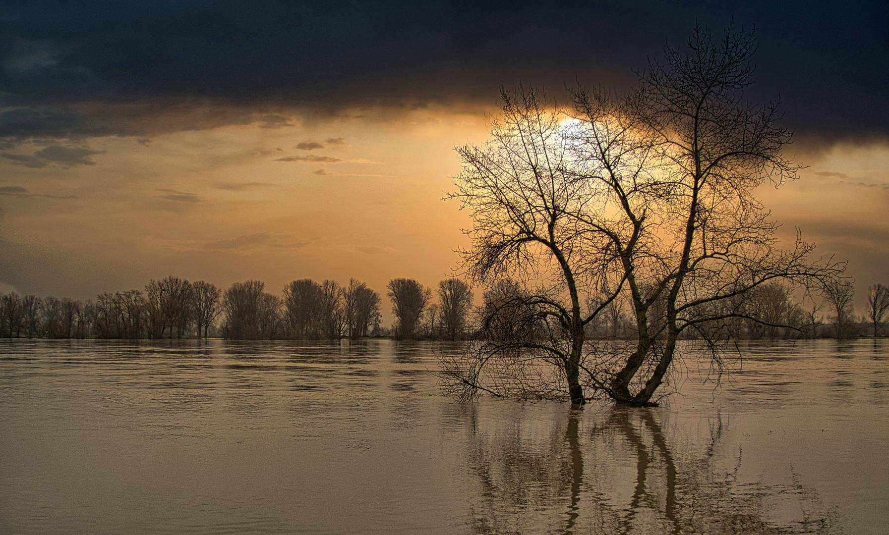 Überflutete Rhein