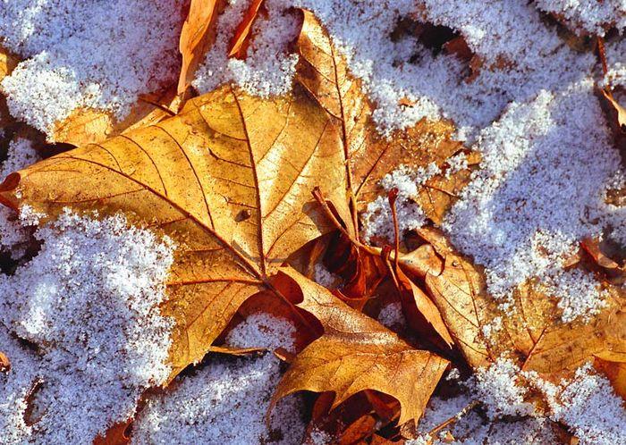 Ubergang Herbst Winter Foto Bild Stillleben Motive Bilder Auf