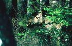 Überraschende Begegnung im Wald