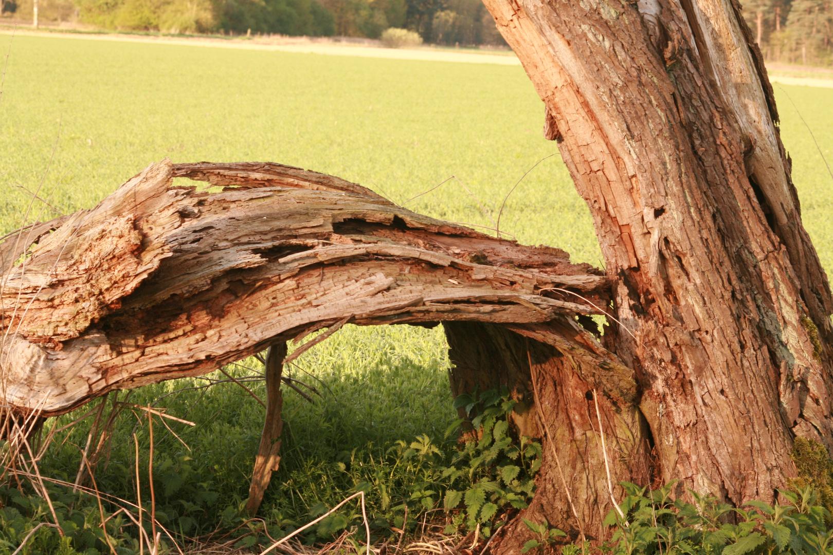 Überreste eines Baumes