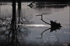 Überschwemmte Oder-Wiesen ...