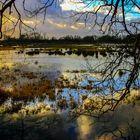 Überschwemmte Wiesen