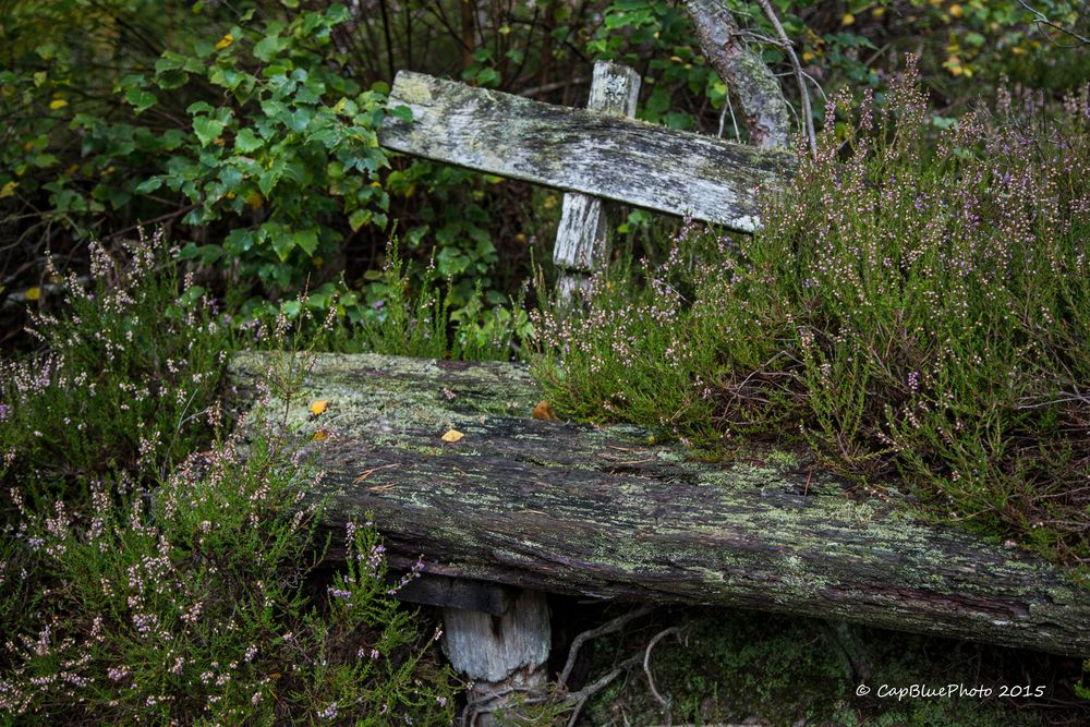 Überwachsene Sitzbank auf der Teufelstischtour ( 9,5 km)