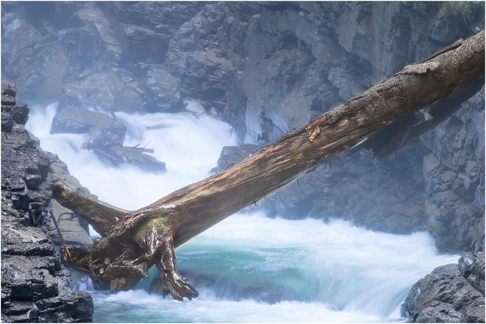 Üble Schlucht Baum