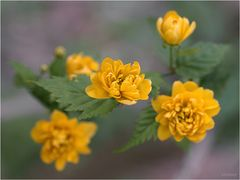 Üppige Blüten ...