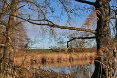 Ufer eines kleinen Sees bei Nünchritz 40 km elbabwärts von Dresden
