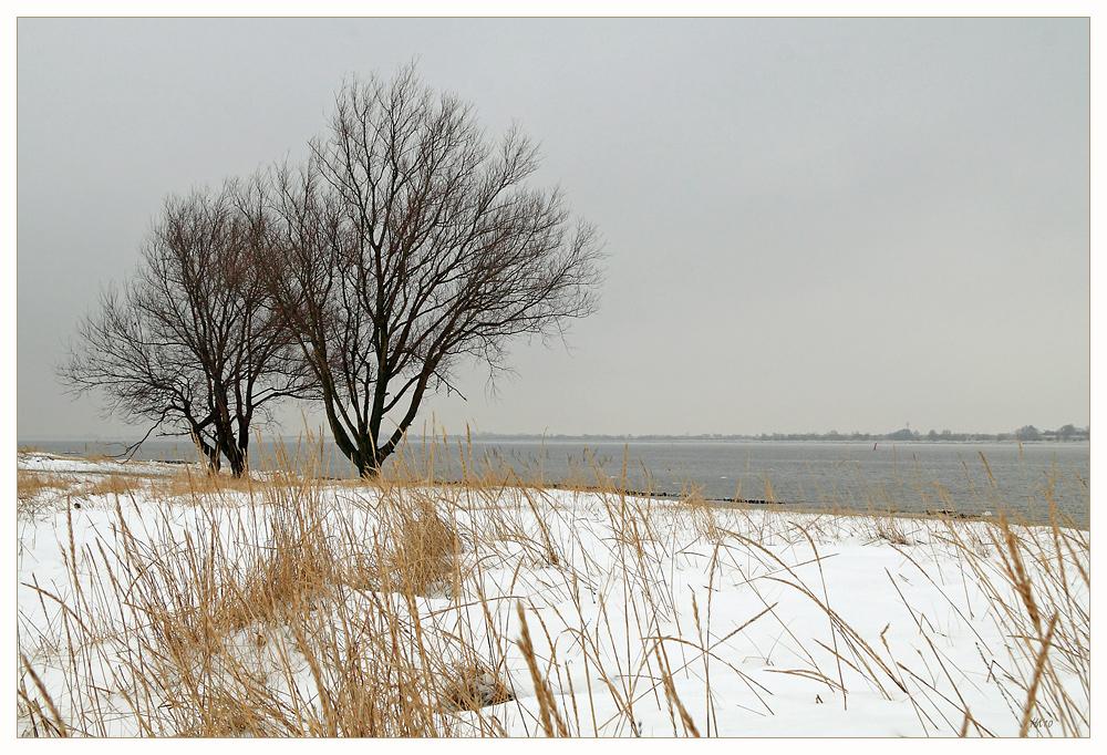 Uferbäume