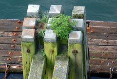 Uferbegrünung