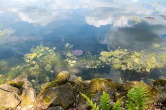 Uferkante mit Spiegelung