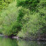 Uferlandschaften