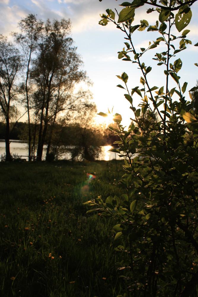 Uferleben