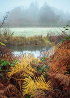 Ufervegetation