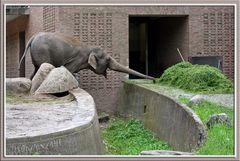 Zoo, Tierpark