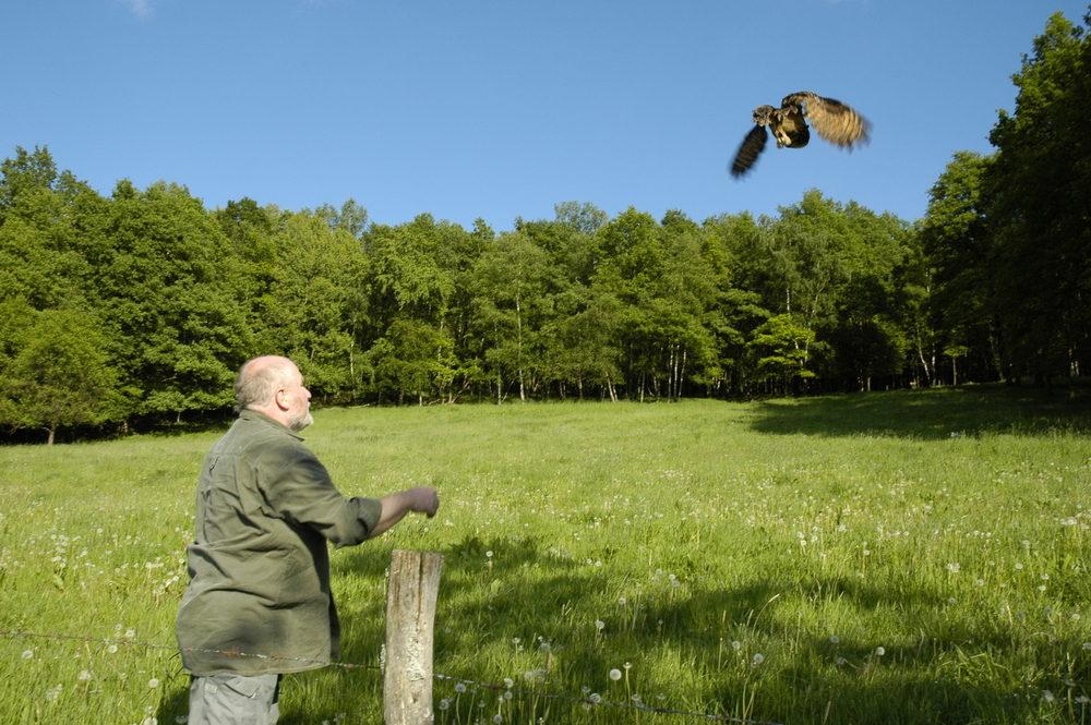 """Uhu """"Franz"""" fliegt in die Freiheit.."""