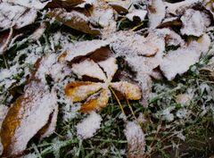 Uhuuuuu - Es schneit
