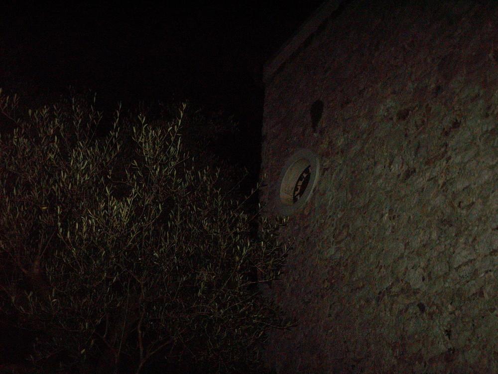 Ulivo di notte
