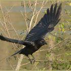"""Ulm - Donau - Friedrichsau - """"black wings"""""""