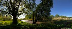 Ulmenpanorama im Mai - Elmtree in may