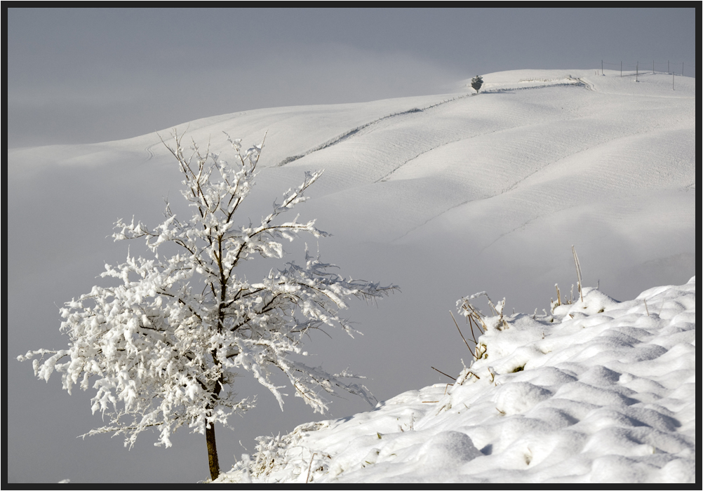 Ultima neve....