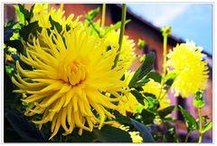 ultimi fiori estivi ...