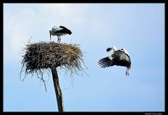 ..ultimi ritocchi al nido..