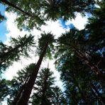 Umgeben von Bäumen