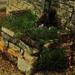umgeben von Steinmauern wächst Zartes....