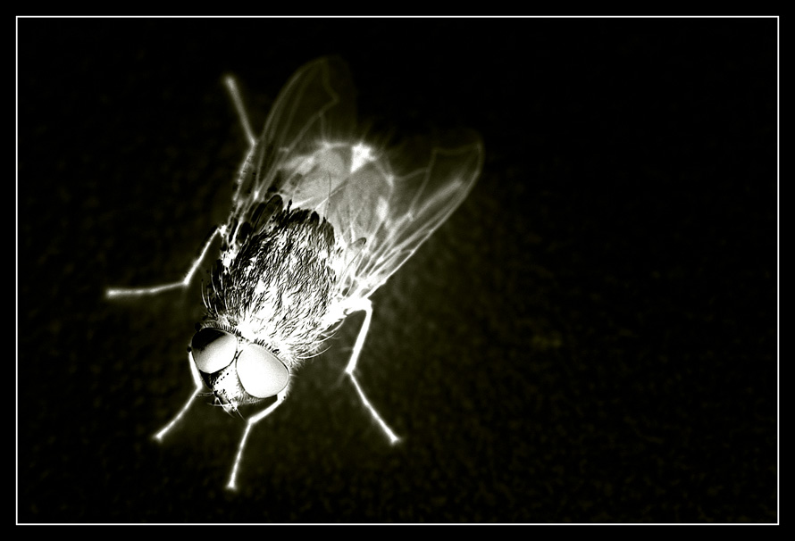 Umgekehrte Fliege