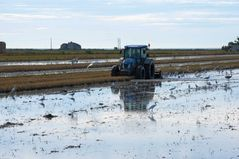 umpflügen eines Reisfeldes